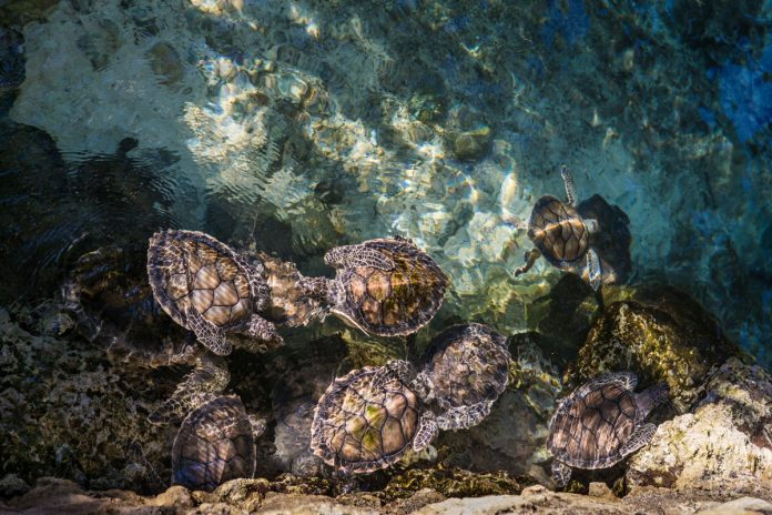 Tall Ted's Turtles by S.E. Schlosser