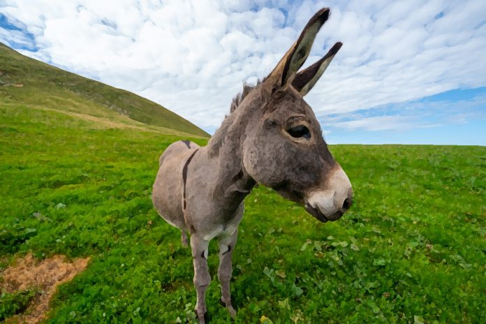 Yankee Doodle Donkey: A Tongue Twister Tale